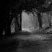 A dark road winding through a forest.