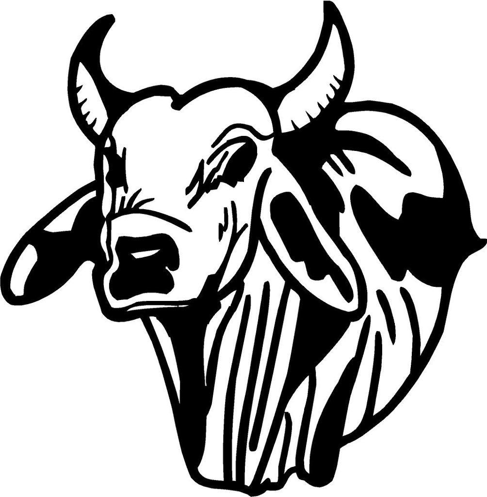 3 black bulls breed young white trailer trash 9