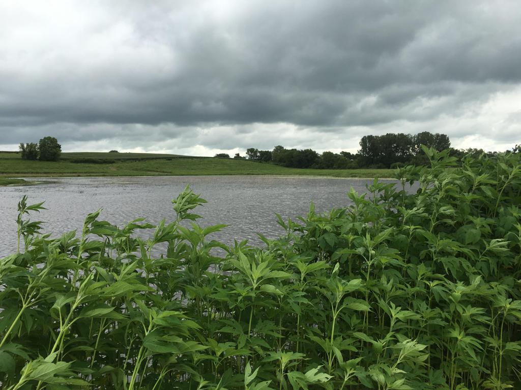 Sanborn WMA - Wetland Restored