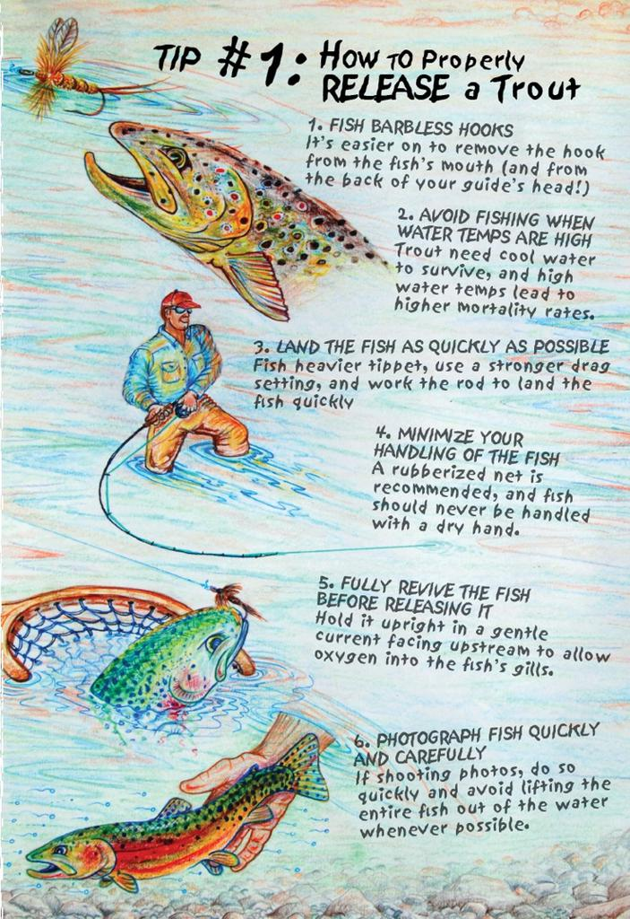 Catch and Release Guidelines