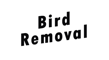 Bird and Bat and Skunk and Raccoon Removal in Mississauga by Max Wild Pest Control and Human Animal Removal in Toronto with Max! Burlington Ontario Pest Control and Animal Control in Toronto. Get rid of pests and bats in Stoney Creek with Max Wild Pest Co