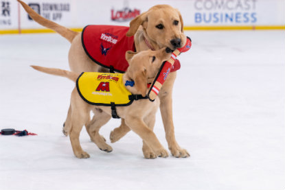 Captain plays with Scout. Photo courtesy of the Washington Capitals